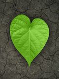 Heart shaped leaf on cracked soil.  Stock Images