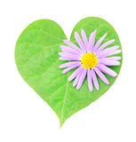Heart-shaped leaf with flower isolated on white Stock Images