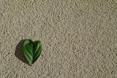 Heart shaped leaf Stock Images