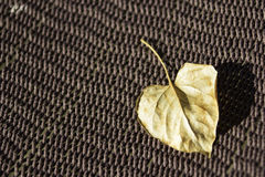 Heart shaped leaf on hammock Royalty Free Stock Image