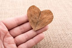 Heart shaped leaf in hand. On canvas royalty free stock images
