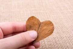 Heart shaped leaf in hand. On canvas stock photo