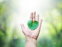 Heart shaped leaf on hand. Over abstract green springtime background royalty free stock image
