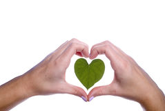 Heart Shaped Leaf Outlined by Girls Hands Royalty Free Stock Images