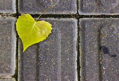 Heart-Shaped Leaf on a Sidewalk. A closeup of a heart-shaped leaf on a sidewalk Royalty Free Stock Image