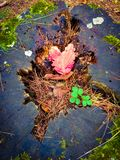 Heart shaped leaf in a tree trunk royalty free stock photos
