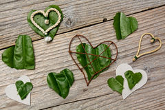 Heart shaped leaves Stock Image