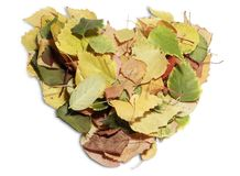 Heart shaped leaves Stock Photos