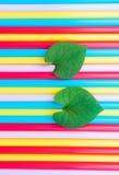 Heart-shaped leaves Stock Photo