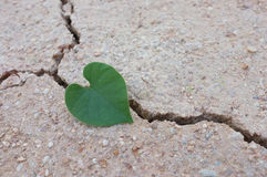 Heart-shaped leaves on cracked earth / love the world Royalty Free Stock Image