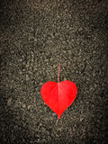 Heart shaped leaves on the floor Royalty Free Stock Photo