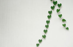 Heart shaped leaves on white wall. Green heart shaped leaves on white wall Royalty Free Stock Photos
