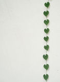 Heart shaped leaves on white wall. Green heart shaped leaves on white wall Stock Photo
