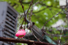 Heart shaped lock on barbed wire Stock Photos
