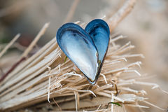 Heart shaped mussel shell Stock Images