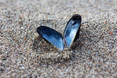 Heart shaped open mussel shell on the beach Stock Image