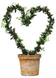 Heart shaped plant Stock Image