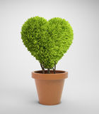Heart shaped plant Stock Photography