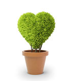 Heart shaped plant Royalty Free Stock Photography