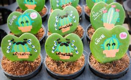 Heart shaped plant Kerrii Hoya with painted roses and message. Of love in pot. important day theme stock photography