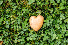Heart shaped potato on green grass background Stock Photo