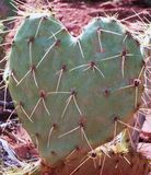 Heart Shaped Prickly Pear Cactus Stock Photography