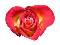 Heart-shaped red rose Royalty Free Stock Image