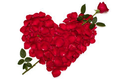 Heart Shaped Rose Love Stock Photo