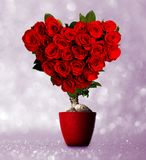 Heart shaped roses Royalty Free Stock Images