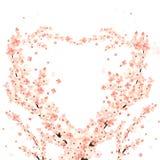 Heart-shaped sakura royalty free stock photo