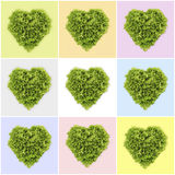 Heart-shaped salad, lettuce on color background Stock Photo