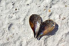 Heart Shaped Seashell Laying on the Beach Stock Photo