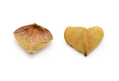 Heart-shaped seed Stock Photos