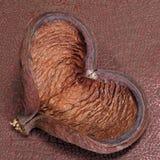 Heart-shaped shell Royalty Free Stock Photos