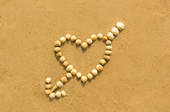 Heart shaped shells on the beach Stock Images
