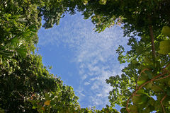Heart-shaped Sky. In a Tropical Forest Royalty Free Stock Images