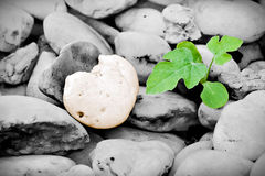 Heart-shaped stone and little plant Stock Images