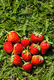 Heart shaped strawberry Stock Images