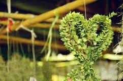 Heart-shaped succulent plant stock photo