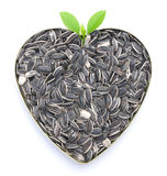 Heart shaped sunflower seeds. Heart shaped tasty sunflower seeds Royalty Free Stock Photography