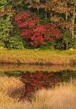 Heart-Shaped Tree Stock Photography