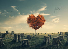 Heart shaped tree in cleared forest Royalty Free Stock Image