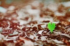 Heart-shaped tree leave Stock Photos