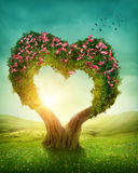 Heart shaped tree stock photos