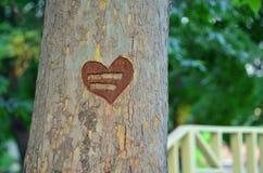 Heart shaped tree. A heart shaped on a tree in a park stock photo