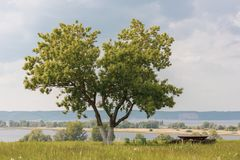 Heart shaped tree with a view of Volga River royalty free stock image