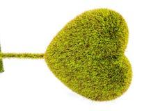 Heart-shaped tree Stock Photo