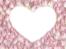 Heart shaped tulip. EPS 10 Stock Images