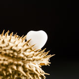 Heart shaped white agate on wild plant dried fruit Royalty Free Stock Photo