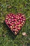 Heart shaped wicker basket  of crab apples on green grass Stock Photo